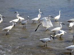birds on sea beach