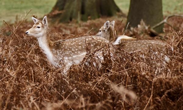 Deer In The Park by JJGEE