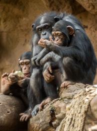 Photo : Monkey business
