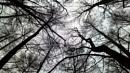 Tree Time by jondf