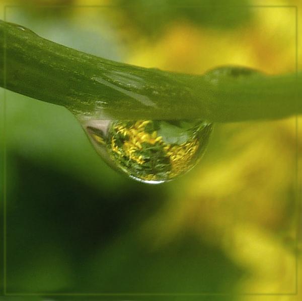 drip, drip, drip by CarolG
