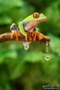 Rain Forest by Miles Herbert