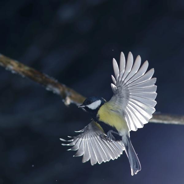 BIRD AND STICK by maratsuikka