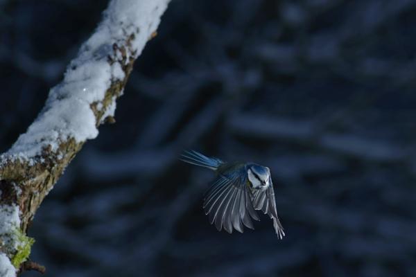 BIRD AND STICK 2 by maratsuikka