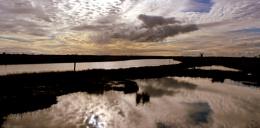 Mautby Marsh