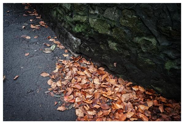 Persistent Autumn by notsuigeneris