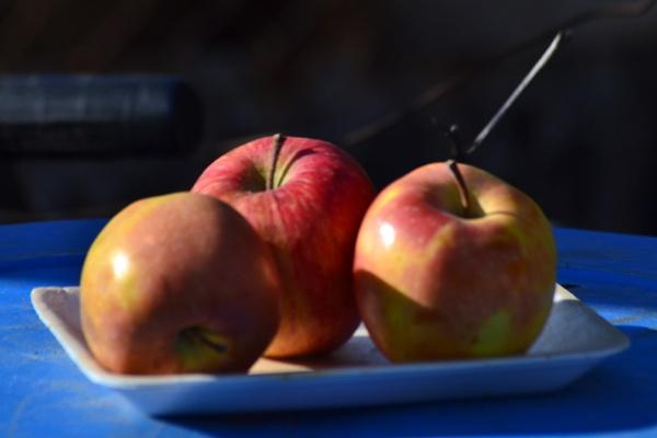 Apples by Laslo
