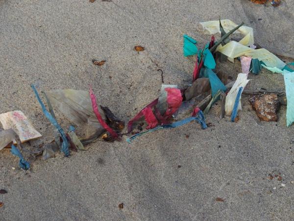 Beach Detritus #2 by handlerstudio