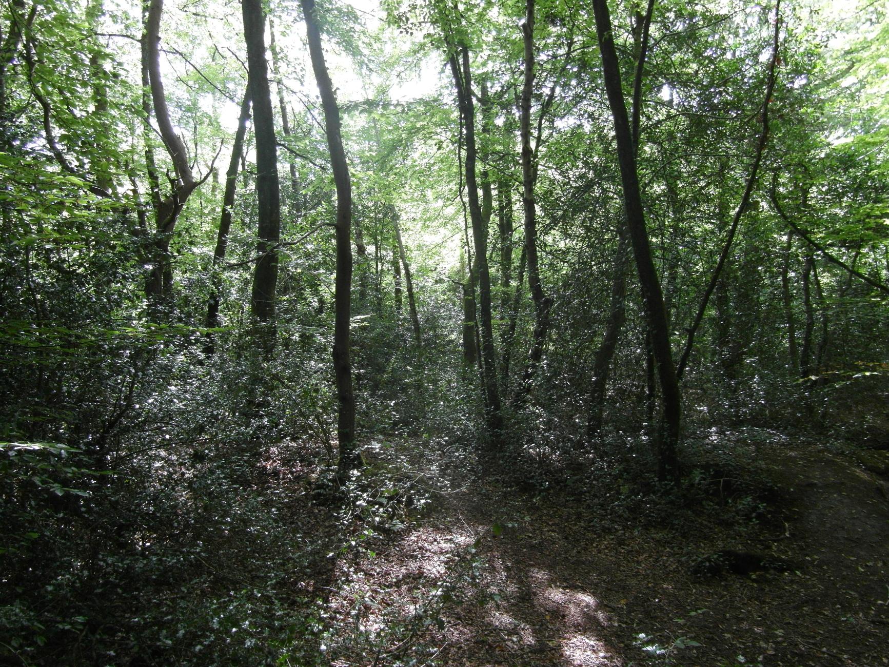 Trees at Decoy