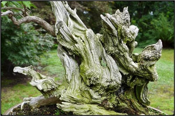 dragon root by FabioKeiner