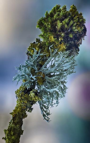 Lichen by iangilmour