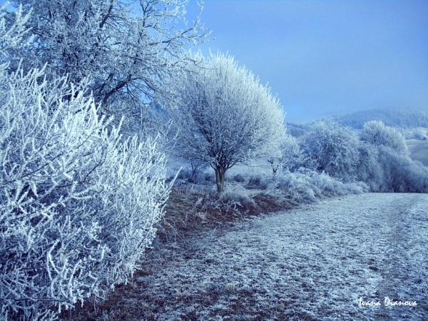 Land of frozen trees by idiabb