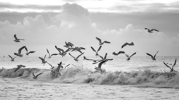 Birds @ Sea by Drummerdelight
