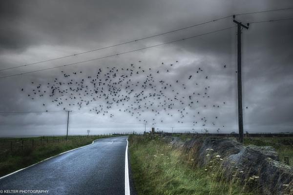 Birds of Benbecula by KelterPhotography
