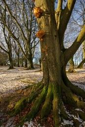 snow, tree, fungi
