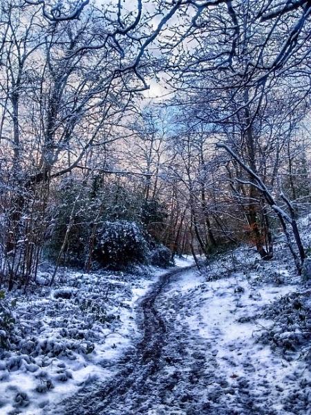Winter wonderland by KrazyKA