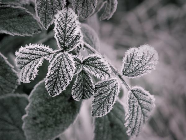 Frosty start by tom_earwaker