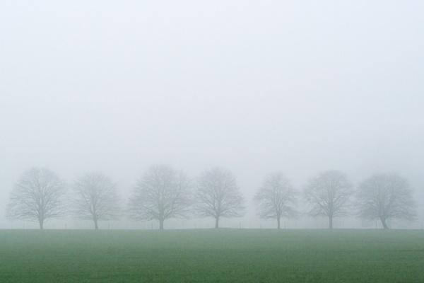 7 trees by tom_earwaker
