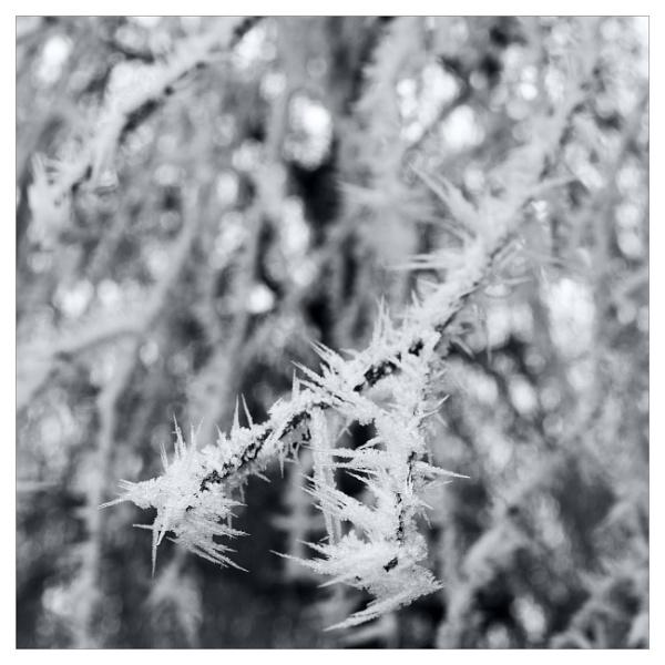 Winter (Part VI) by bliba