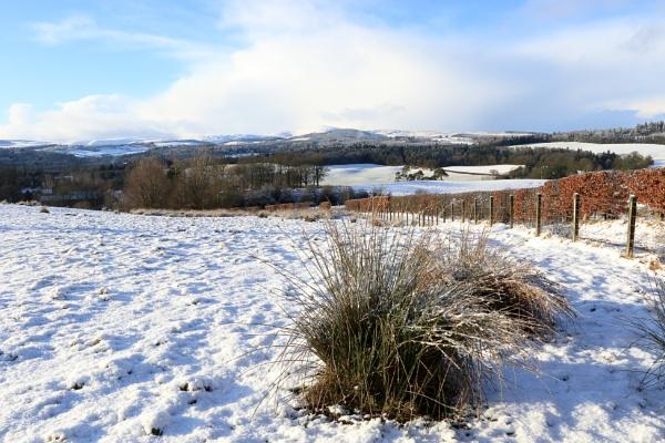 snowscape by callumcorrie