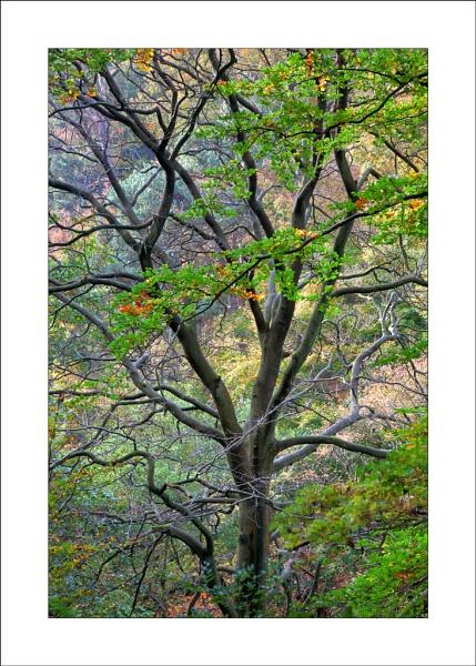 Padley Gorge by Steve-T