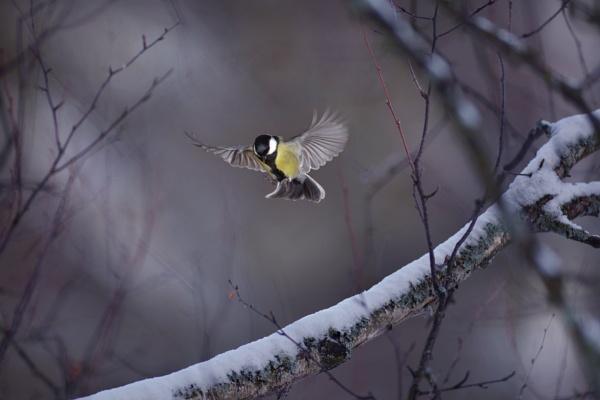 BIRD AND STICK 3 by maratsuikka