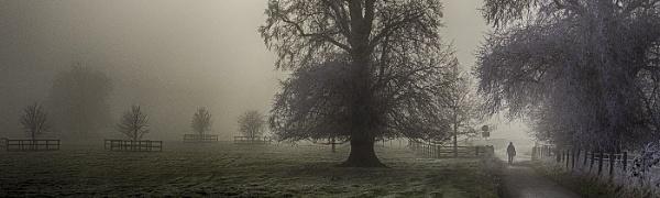 Misty Morning Walk by judidicks