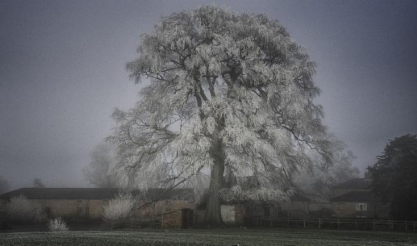 Magical winter Tree by judidicks