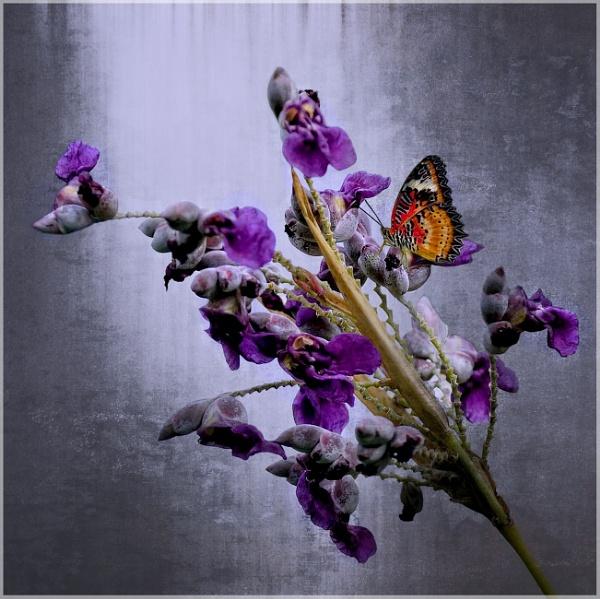 Purple Fantasy by sweetpea62
