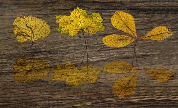 Autumn Reflections by Irishkate