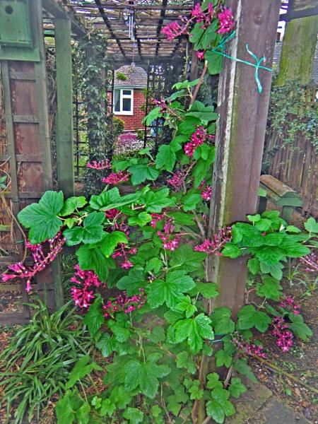 My Garden by Gypsyman