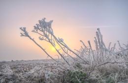 Fog Frost Sunrise