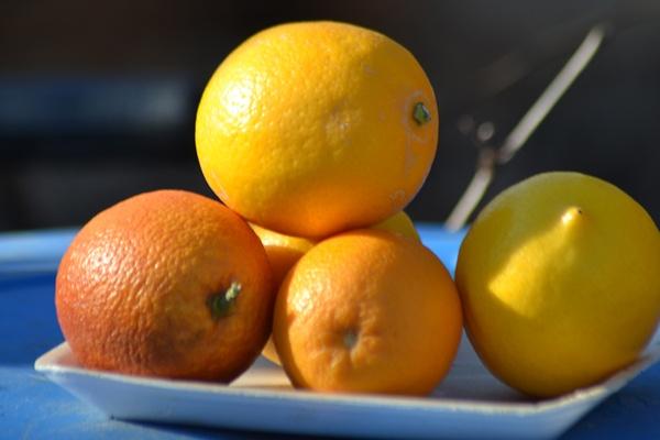 Citrus fruits by Laslo