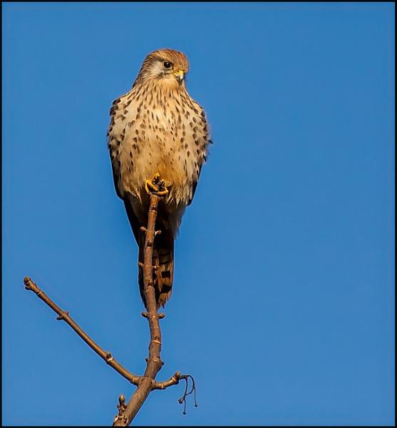 Hawk-eye by civitas