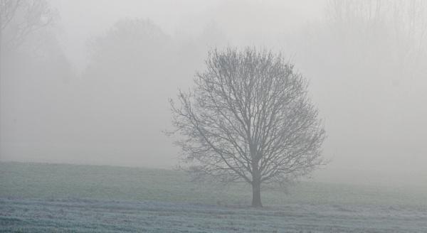 Freezing Fog by af1