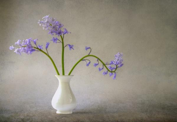 Bluebells by flowerpower59