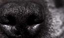puppy love by feen96