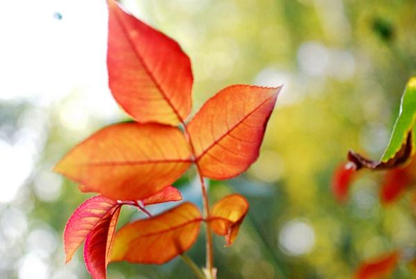 Autumn by KrazyKA