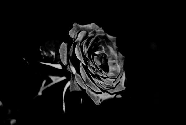Flower by KrazyKA