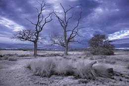 Carlton Marsh Infrared