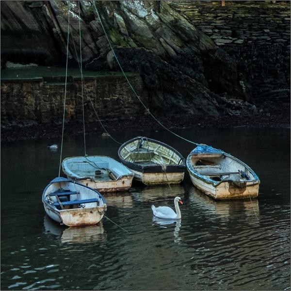 Polperro Swan by DTM