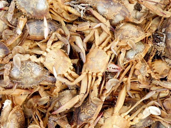 Crabs by Savvas511