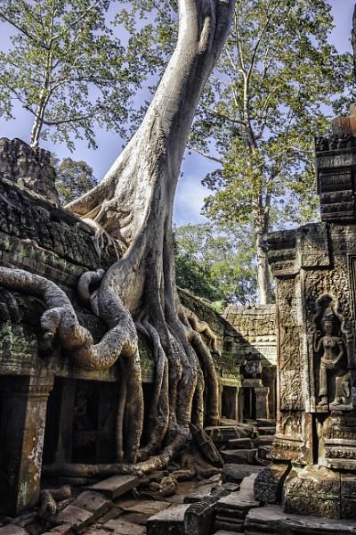 Trees at Angkor by FyneChris