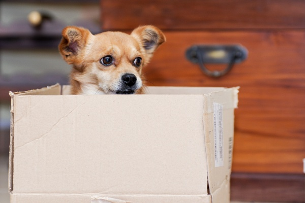 The little dog in package by Catest79