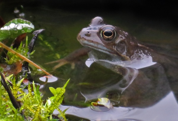 The Frogs Are Back by KarenFB