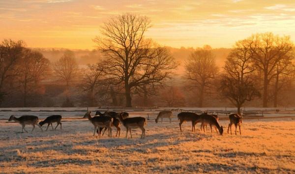 Knole Park Deer by sevenmalt