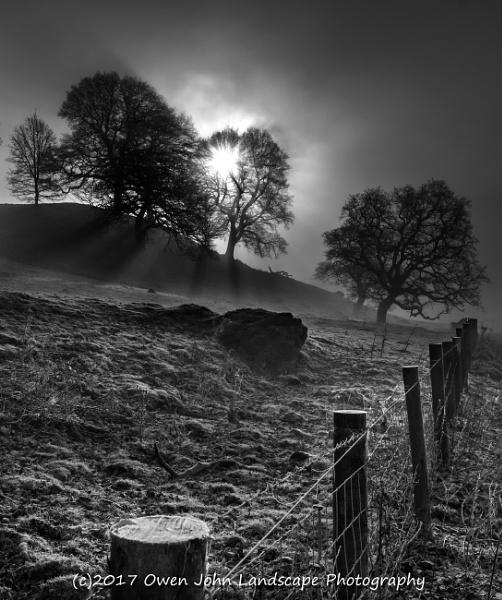Misty Trees by owen_john