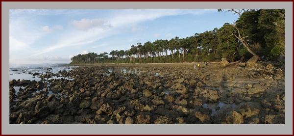Coral Bed & Sea Mahua Trees by prabhusinha
