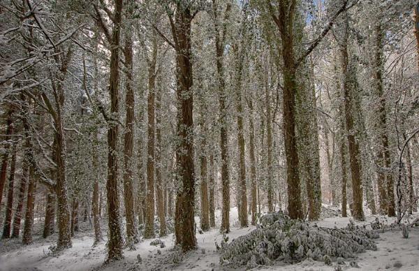 Winterland by bombolini