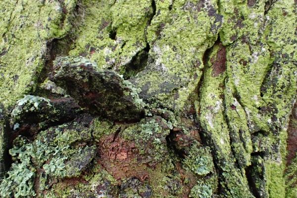 Tree Flora by nclark